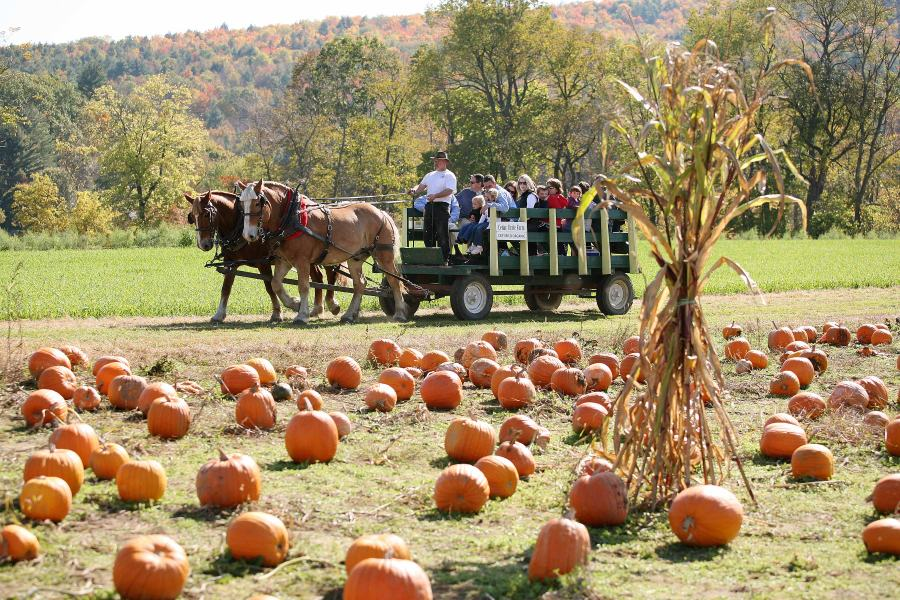 Horsedrawn wagon rides to the pumpkin patch at Cedar Circle Farm in E. Thetford