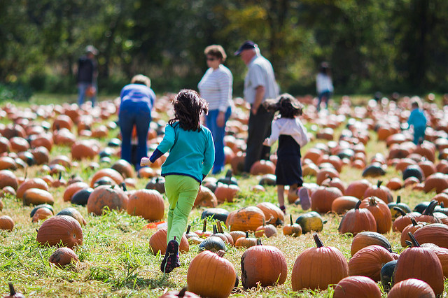 Families in the pumpkin patch at Cedar Circle Farm in East Thetford VT