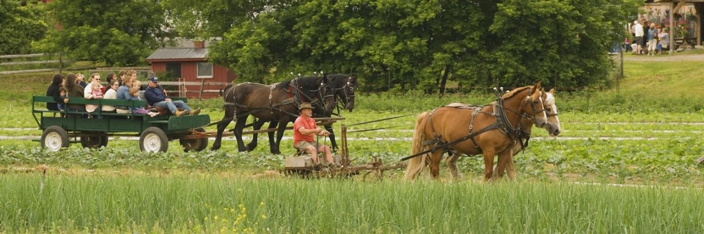 Horse drawn wagon rides at Cedar Circle Farm's annual Strawberry Festival