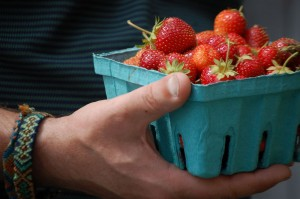 organic strawberries at Cedar Circle Farm